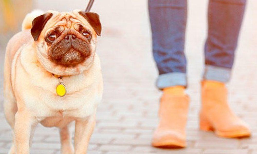 Tips para sacar a tu perro en tiempos de cuarentena