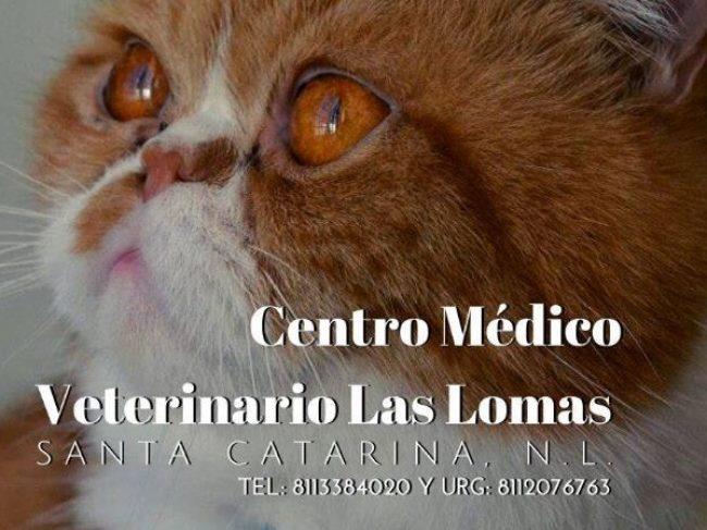 Centro Medico Veterinario Las Lomas
