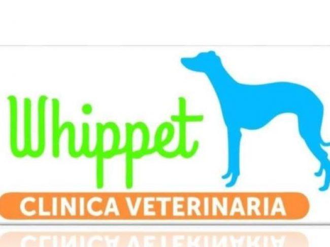 Clinica Veterinaria Whippet