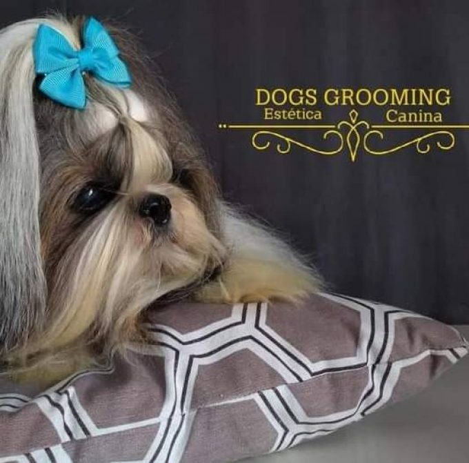 Dogs Grooming