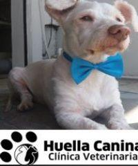 Huella Canina Clinica Veterinaria