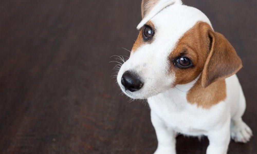 Tips para educar a un perro