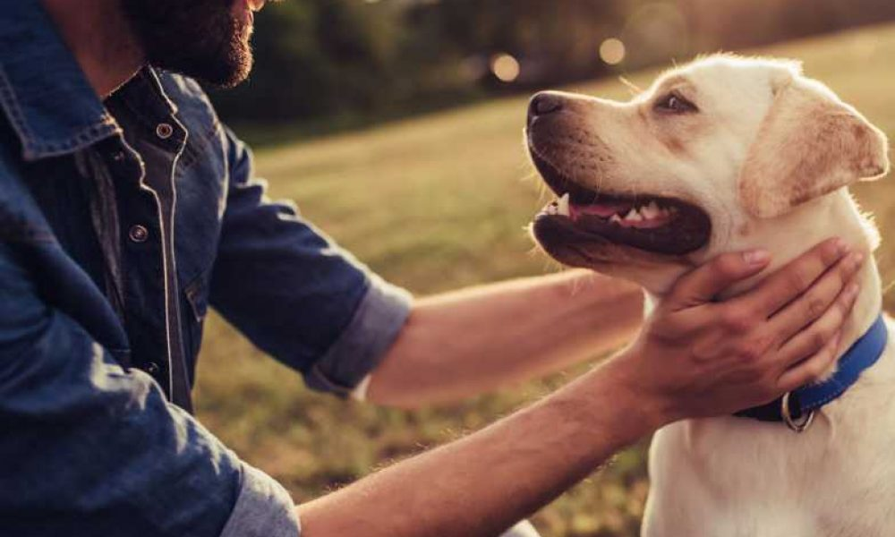 Trucos para aprender a cuidar a tu perro