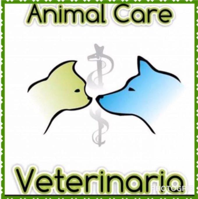 Veterinaria Animal Care