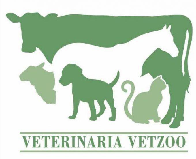 Vetzoo Clínica Veterinaria
