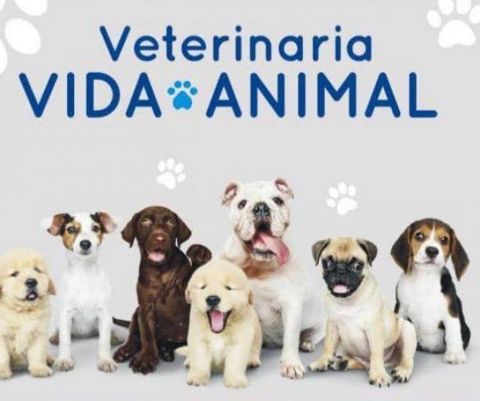Veterinaria Vida Animal