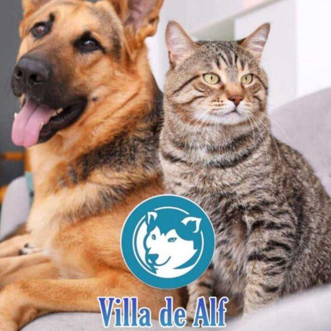 Villa de Alf Consultorio Veterinario