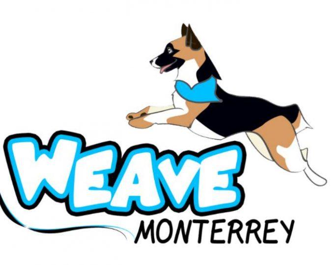 Weave Monterrey – Adestramiento Canino